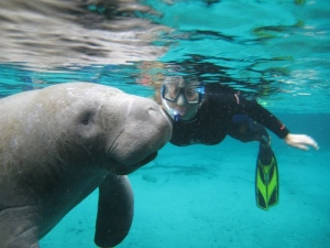 Jenni swimming with the manatees