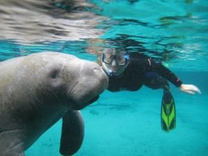 Jenni swimming with the manatees